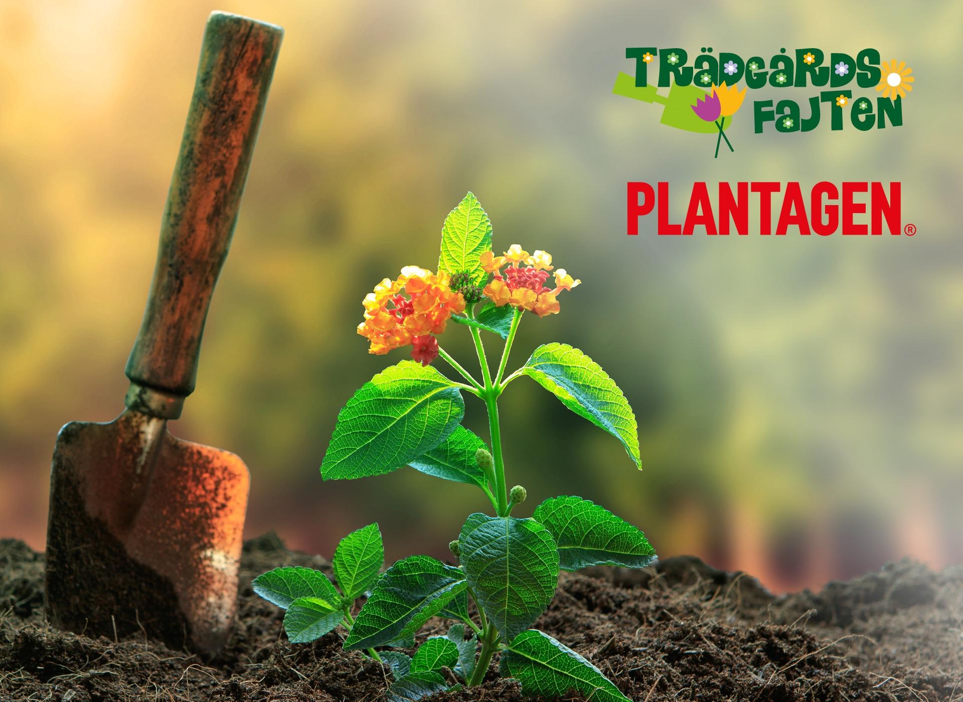 EUROFLORIST PRESENTKORT PLANTAGEN